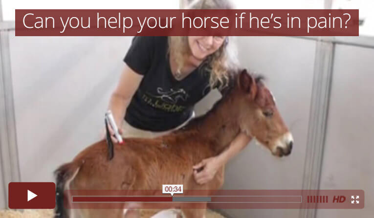 Can you help your horse if he's in pain?